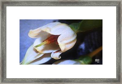 Aphids Framed Print by Michele Caporaso