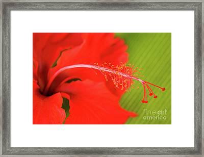 Aphrodisiac Framed Print
