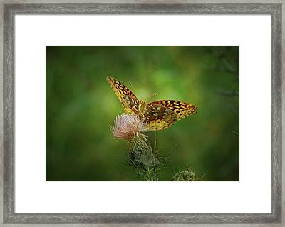 Framed Print featuring the photograph Aphrodite Fritillary Butterfly by Sandy Keeton