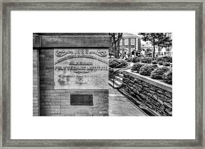 Api In Black And White Framed Print by JC Findley