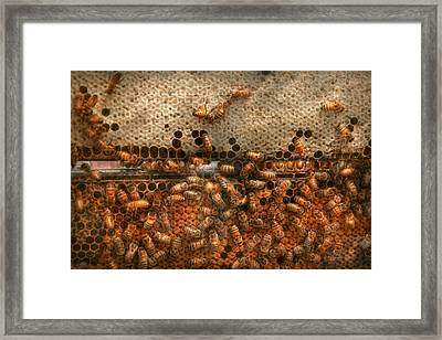 Apiary - Bee's - Sweet Success Framed Print