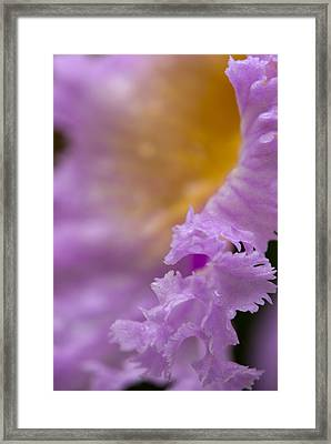 Apollo Framed Print by Andreas Freund