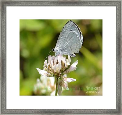Framed Print featuring the photograph Appalachian Azure by Randy Bodkins