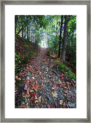 Appalachian Trail Hike Framed Print