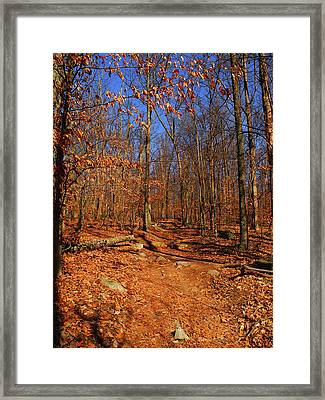 Appalachian Trail In Maryland 4 Framed Print by Raymond Salani III