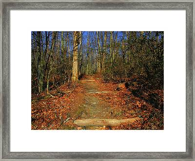 Appalachian Trail In Maryland Steps Framed Print by Raymond Salani III