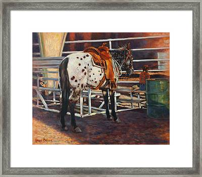 Appaloosa Framed Print by Harvie Brown