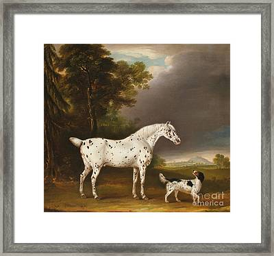 Appaloosa Horse And Spaniel Framed Print by Thomas Weaver