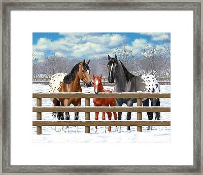 Appaloosa Horses In Winter Ranch Corral Framed Print by Crista Forest