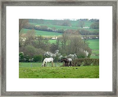 Appaloosa In May Framed Print