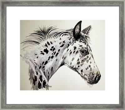Appaloosa Framed Print by Keran Sunaski Gilmore