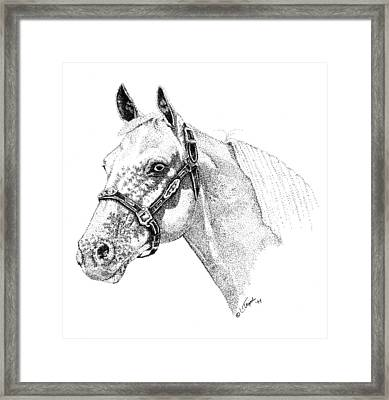 Appaloosa Framed Print