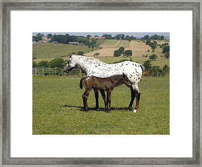 Appaloosa Mare And Foal Framed Print
