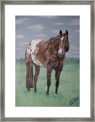 Framed Print featuring the drawing Appaloosa by Melita Safran