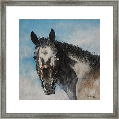 Appaloosa Framed Print by Rob Dreyer