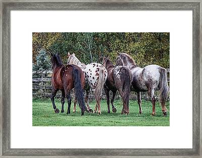 Appaloosas Framed Print