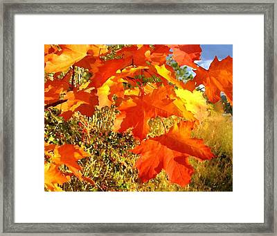 Applause For Autumn Framed Print by Will Borden
