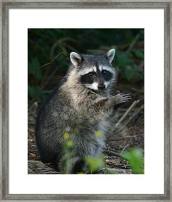 Applause Framed Print by Fraida Gutovich