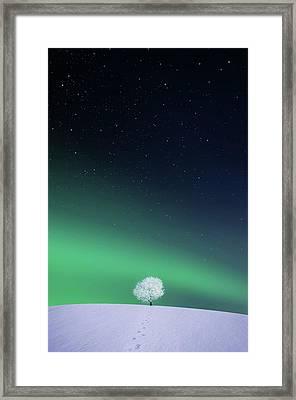 Apple Framed Print by Bess Hamiti