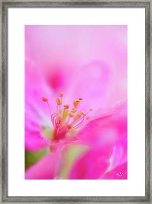 Apple Blossom 1 Framed Print by Leland D Howard