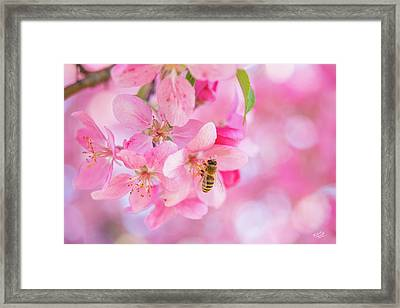 Apple Blossom 2 Framed Print by Leland D Howard