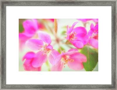 Apple Blossom 6 Framed Print by Leland D Howard