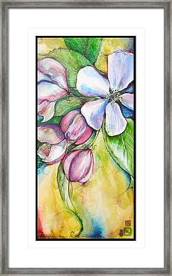 Apple Blossom Framed Print by Clare Catling