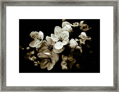Apple Blossom Framed Print by Frank Tschakert
