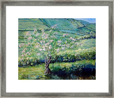 Apple Blossom In The Valley Framed Print by Wendy Head