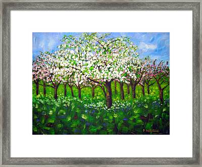 Apple Blossom Orchard Framed Print