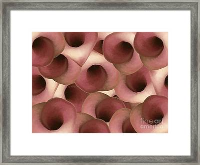 Apple Blossom Petals Framed Print