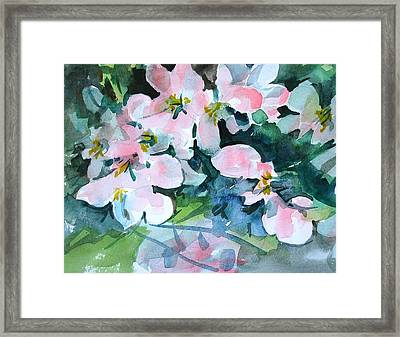 Apple Blossom Time Framed Print