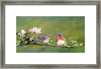Apple Blossoms And Bluebirds Framed Print