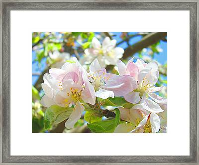 Apple Blossoms Art Prints Spring Trees Baslee Troutman Framed Print
