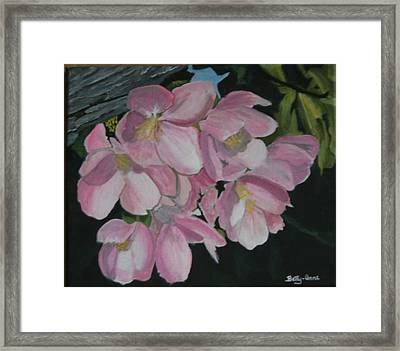 Framed Print featuring the painting Apple Blossoms by Betty-Anne McDonald