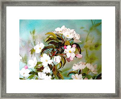 Apple Blossoms Framed Print by Faye Ziegler
