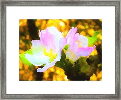 Apple Blossoms Framed Print by Debra Lynch
