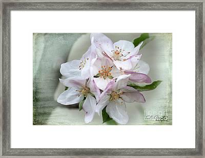 Apple Blossoms From My Hepburn Garden Framed Print