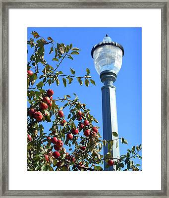 Framed Print featuring the photograph Apple Fest  by Irina Sztukowski