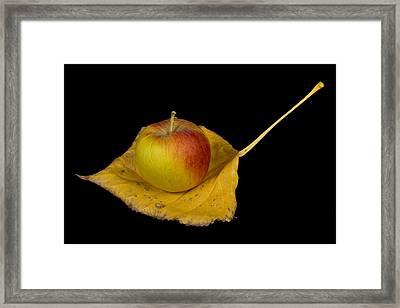 Apple Harvest Autumn Leaf Framed Print