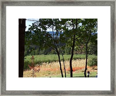 Apple Hill Trees Framed Print by Dawn Marie Black