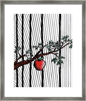 Apple Framed Print by James Williams