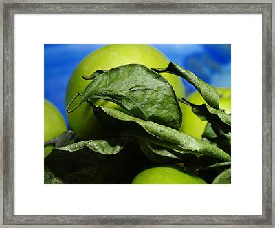 Apple Leaves Framed Print by Michael Canning