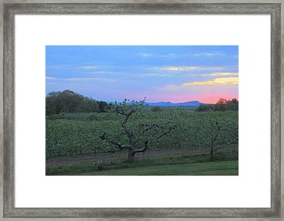 Apple Orchard And Holyoke Range At Sunset Framed Print