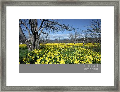 Framed Print featuring the photograph Apple Orchard In January by Stan and Anne Foster