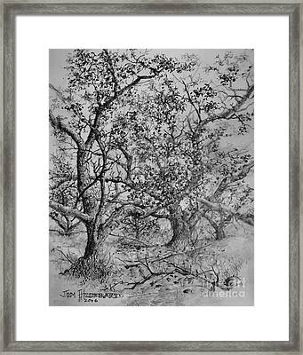 Apple Orchard Framed Print by Jim Hubbard