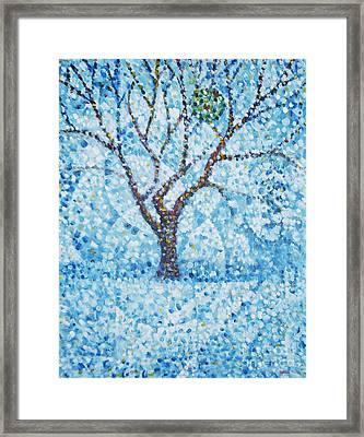 Apple Orchard / Winter Framed Print by Jim Rehlin