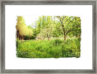 Apple Orchards. Framed Print by ShabbyChic fine art Photography
