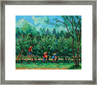 Apple Pickers  Littletree Orchard  Ithaca Ny Framed Print