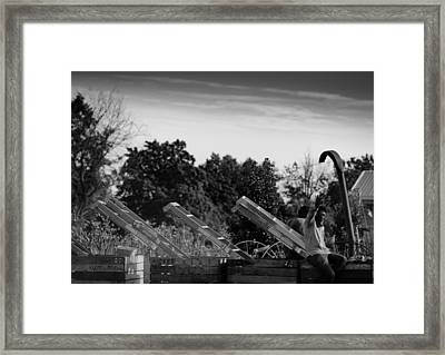 Apple Picking Framed Print